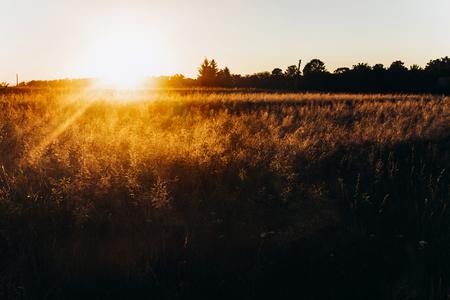 Schönes Sonnenlicht am Abend im Sommerfeld. sonnenuntergang strahlen. atmosphärischer Moment. warmes Bild. atmosphärischer Moment. Tag der Erde Standard-Bild - 75733806
