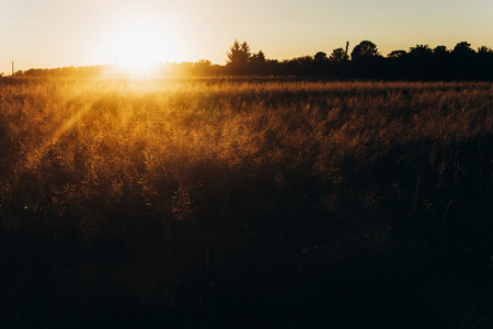 sunset rays at summer field. meadow under amazing sunshine. beautiful grassland silhouette. atmospheric moment. earth day Stock Photo