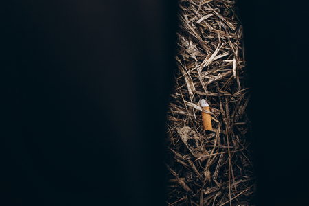 cigarette butt top view with space for text. stop smoking concept. smoked used cigarettes butts in the dirt on brown background on old grass ground. world no tobacco day.