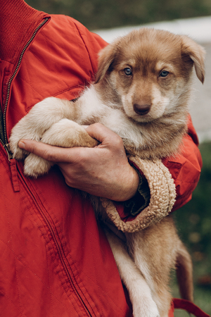 cute brown puppy with amazing blue eyes in woman hands on background of autumn park. space for text. faithful friend concept Stock Photo