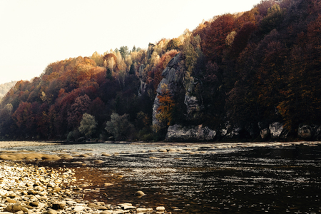beautiful amazing autumn woods and river in sunlight, breathtaking landscapes  in ukrainian mountains, national park