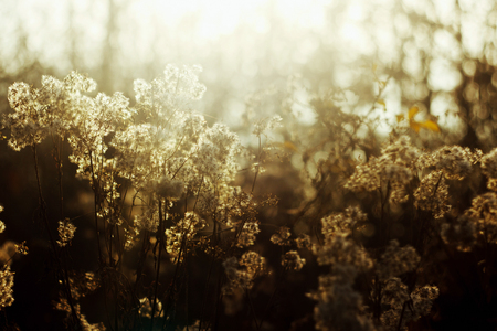 beautiful natural amazing soft white and brown herbs and plants in sunlight on the background of sunny autumn forest