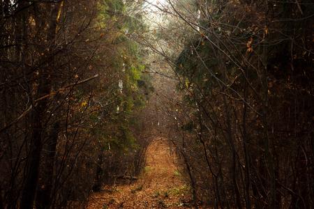 日当たりの良い秋の森の壁紙の背景に黄色い森の中で美しい霧雰囲気道路