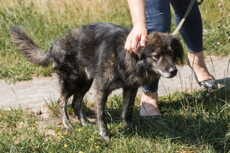 Female owner caressing cute old grey dog while on a walk outside, woman petting mongrel dog, animal rescue concept Reklamní fotografie