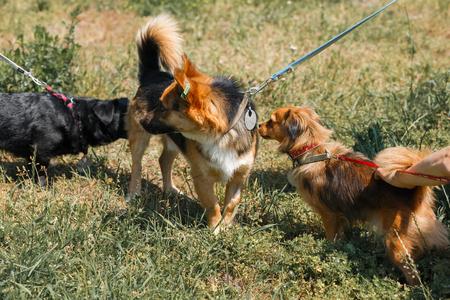 Leuke honden maken vrienden en ontmoeten buiten in het park, honden snuiven elkaar, dieren shelter concept Stockfoto