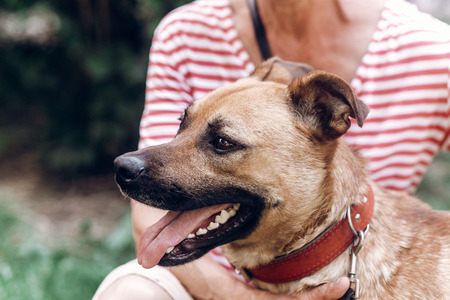 Happy dog portait, woman hugging cute mongrel dog outdoors, big eyed puppy posing with tongue out, animal adoption concept Stok Fotoğraf
