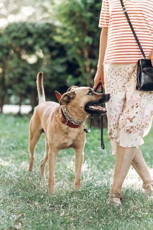 Cane leale sveglio che esamina il suo proprietario, concetto del migliore amico dell'uomo, cane amichevole su una passeggiata all'aperto, concetto di riparo animale Archivio Fotografico - 84113211