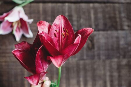 red lily flower on rustic wooden background. gorgeous bloom on rustic wood backdrop. space for text. greeting card. celebration concept. unusual spring image. Stock Photo