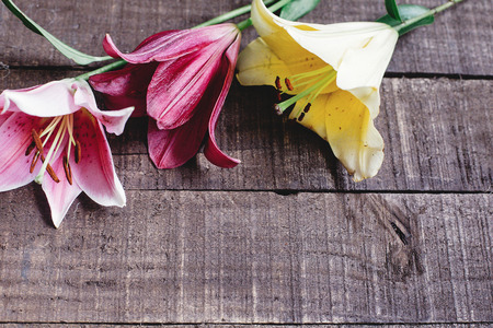 colorful lily flowers on rustic wooden background. gorgeous bloom, yellow red  pink lilies on rustic wood backdrop. space for text. greeting card. celebration concept. unusual spring image.
