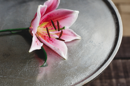 pink lily flower on metal tray on rustic wooden background. gorgeous bloom on rustic wood backdrop. space for text. greeting card. celebration concept. unusual Stock Photo