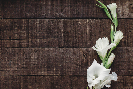 beautiful minimal white gladiolus on rustic wooden background top view. stylish gladioli on rustic brown wood, space for text, holiday greeting card. minimalistic floral flat lay, spring image