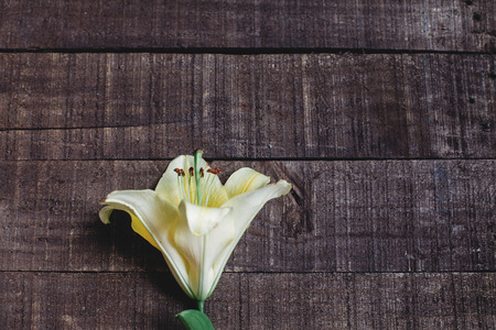 beautiful yellow lily flower on rustic wooden background flat lay. gorgeous bloom minimalistic  on rustic wood backdrop. space for text. greeting card. celebration concept. spring image