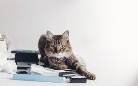 cute cat sitting on table with work items, funny moment. cat freelancer with amazing looking eyes at home. space for text Stockfoto