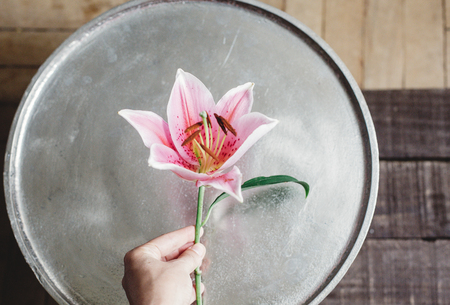 pink lily flower in hand at metal tray on rustic wooden background. gorgeous bloom on rustic wood backdrop. space for text. greeting card. celebration concept