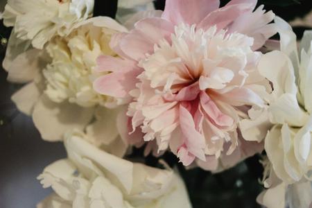 big beautiful pink and white peonies flowers on old table in rustic indoors Zdjęcie Seryjne