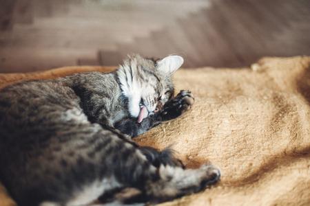 Lindo gato lambendo a pata no elegante cobertor amarelo com emoções engraçadas no quarto rústico. gato malhado bonito alisando e lavando-se, limpando peles. espaço para texto Foto de archivo - 84656457
