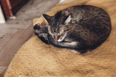 소박한 방에 사랑 스럽다 감정과 세련 된 노란색 담요에서 자 고하는 아름 다운 고양이. 귀여운 tabby 휴식입니다. 텍스트위한 공간입니다. 편안한 장소,