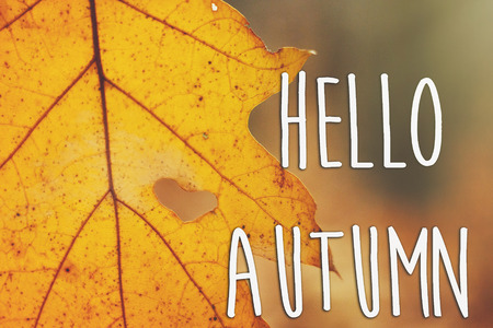 hello autumn fall text sign on beautiful yellow autumn leaf with heart shaped tear on the background of autumn sunny forest. seasonal greeting card concept. creative fall image