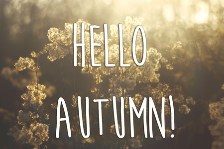 hello autumn fall text sign on beautiful soft white and brown herbs and plants in sunlight on the background of sunny autumn forest. seasonal greeting card concept. fall image