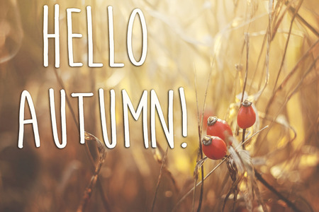 hello autumn fall text sign on beautiful red berries of dog-rose on a branch and herbs on the background of sunny autumn forest. seasonal greeting card concept. fall image