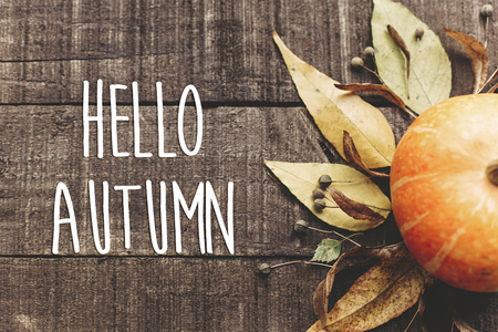 hello autumn text, greeting card. fall image flat lay. beautiful pumpkin and leaves and berries on rustic wooden background, top view. cozy autumn mood