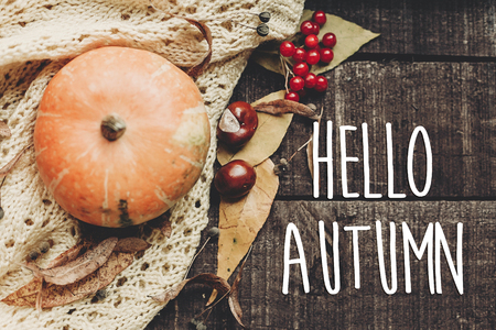 hello autumn text, greeting card. fall image flat lay. beautiful pumpkin and leaves and berries on sweater on rustic wooden background, top view. cozy autumn mood Stockfoto
