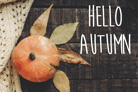 hello autumn text, greeting card. fall image flat lay. beautiful pumpkin and leaves on sweater on rustic wooden background, top view. cozy autumn mood