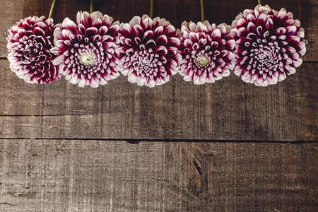 Bella dahlias su sfondo rustico di legno pianeggiante. fiori di autunno viola vista dall'alto, saluti stagionali. biglietto di auguri floreale con spazio per il testo. Archivio Fotografico - 87432095