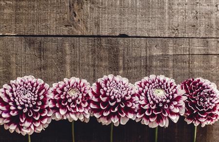 Bella dahlias su sfondo rustico di legno pianeggiante. fiori di autunno viola vista dall'alto, saluti stagionali. biglietto di auguri floreale con spazio per il testo. Archivio Fotografico - 87432108