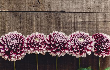 Bella dahlias su sfondo rustico di legno pianeggiante. fiori di autunno viola vista dall'alto, saluti stagionali. biglietto di auguri floreale con spazio per il testo. Archivio Fotografico - 87432111