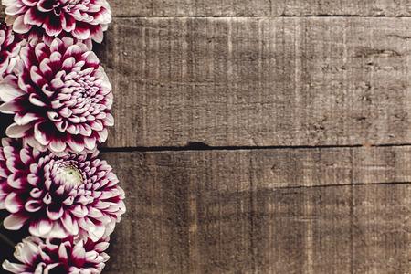 Bella dahlias su sfondo rustico di legno pianeggiante. fiori di autunno viola vista dall'alto, saluti stagionali. biglietto di auguri floreale con spazio per il testo. Archivio Fotografico - 87432124