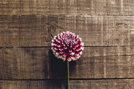 Belle dalie su piano in legno rustico distesi. vista superiore del fiore semplice autunno viola, saluti stagionali. biglietto di auguri floreale con spazio per il testo. immagine minimalista Archivio Fotografico - 87432131