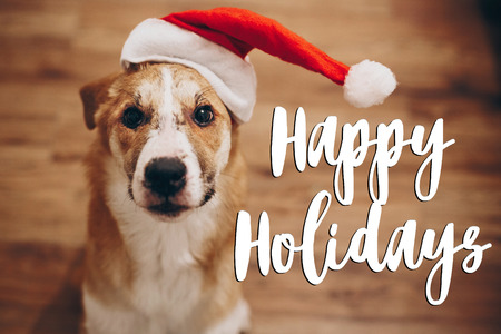 happy holidays text, seasonal greetings card sign. dog in santa hat. space for text. cute surprised brown dog in red hat sitting in stylish room with adorable look. happy holidays