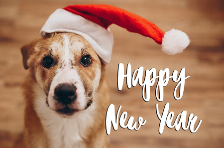 happy new year text, seasonal greetings card sign. dog in santa hat. cute brown dog in red hat sitting in stylish room with adorable look. happy holidays