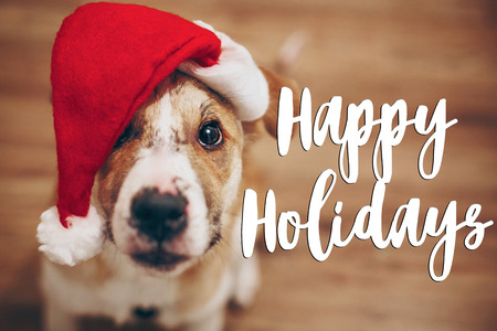 happy holidays text, seasonal greetings card sign. dog in santa hat.  cute brown dog in red hat sitting in stylish room with adorable look. happy holidays Stock Photo