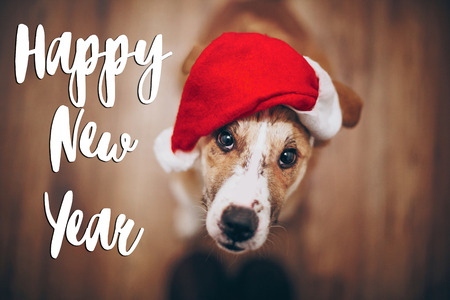 happy new year text, seasonal greetings card sign. dog in santa hat. merry christmas concept. space for text. cute brown dog in red hat sitting in stylish room with adorable look. happy holidays