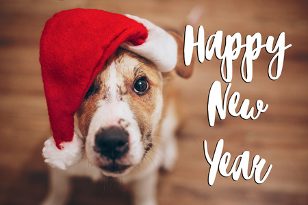 happy new year text, seasonal greetings card sign.  cute dog in santa hat. space for text. cute brown dog in red hat sitting in stylish room with adorable look. happy holidays