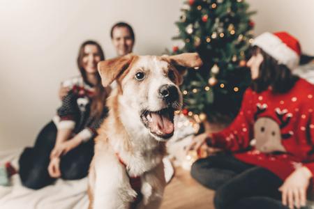 famille heureuse dans les chandails élégants et chien drôle mignon célébrant à l'arbre de Noël avec des lumières. moments émotionnels. joyeux Noël et bonne année concept. espace pour le texte Banque d'images