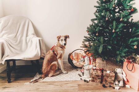 joyeux Noël et bonne année concept. mignon chien brun assis dans une salle festive sous l'arbre de Noël avec des lumières et des cadeaux, espace pour le texte