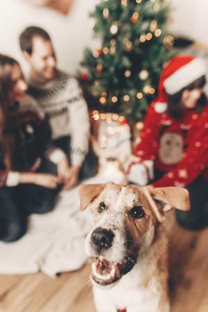 Chien drôle mignon regardant en face et heureuse famille élégante dans des chandails festifs s'amuser aux lumières d'arbre de Noël. joyeux Noël et bonne année concept. joyeuses fêtes. espace pour le texte