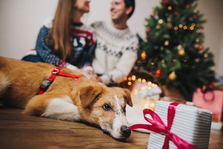 couple heureux, étreindre à arbre de Noël avec des lumières et chien mignon regardant cadeau. moments de famille drôles. joyeux Noël et bonne année concept, salutations saisonnières, joyeuses fêtes. atmosphérique