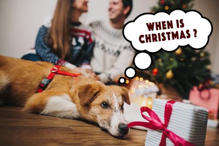 couple heureux, étreindre à arbre de Noël avec des lumières et un chien mignon regardant cadeau et de la pensée. moments de famille drôles. joyeux Noël et bonne année concept, salutations saisonnières, joyeuses fêtes.