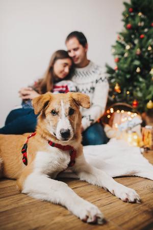 couple heureux étreindre embrassant à l'arbre de Noël avec des lumières et chien marron à la recherche. moments heureux en famille. joyeux Noël et bonne année concept, salutations saisonnières, joyeuses fêtes Banque d'images