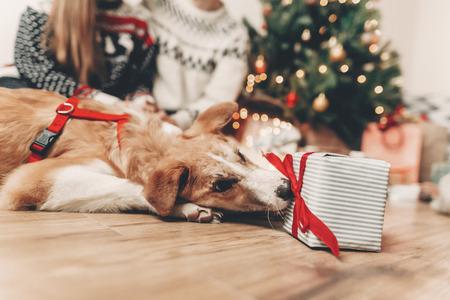 Chien drôle mignon et cadeau élégant sur fond de famille heureuse dans des chandails festifs aux lumières d'arbre de Noël. joyeux Noël et bonne année concept. joyeuses fêtes. espace pour le texte