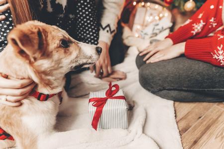 joyeux Noël et bonne année concept. Chien mignon avec agift aux lumières d'arbre de Noël, famille élégante de hipster dans des pulls festifs avec un chiot. joyeuses fêtes. salutations saisonnières