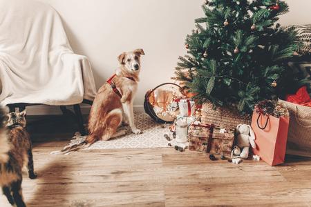 joyeux Noël et bonne année concept. mignon chien brun assis dans la salle festive sous l'arbre de Noël avec des lumières et des cadeaux et chat, espace pour le texte