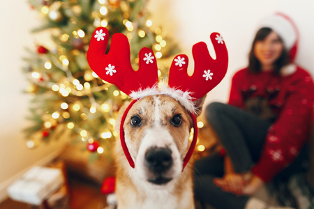 cute funny puppy in reindeer hat sitting at beautiful chrismas tree with lights and presents. seasonal greetings, happy holidays. merry christmas and happy new year concept. space for text Stock Photo