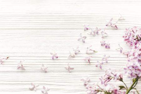 hello spring image. beautiful tender lilac flowers and petals in light on white wooden rustic background top view. happy earth day. greeting card. space for text. happy mothers day