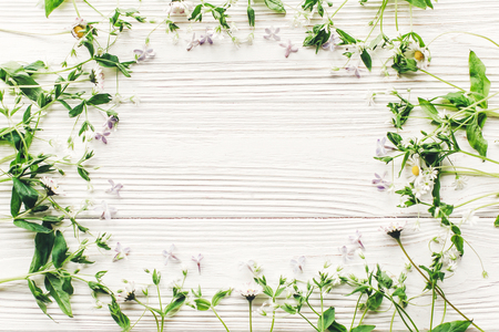 hello spring flat lay. fresh daisy lilac flowers and green herbs frame on white wooden rustic background top view. greeting card. space for text. mock-up. happy mothers day. earth day