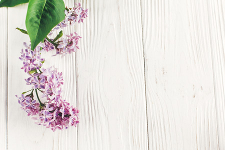 happy mothers day. beautiful lilac flowers on rustic white wooden background top view. space for text. greeting card. earth day. happy womens day. eco. hello spring flat lay image